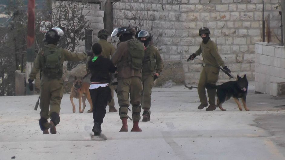 Caught on Video: Israeli Soldiers Use Dogs to Terrorize Palestinian Child